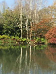 RHS Rosemoor Gardens in Devon