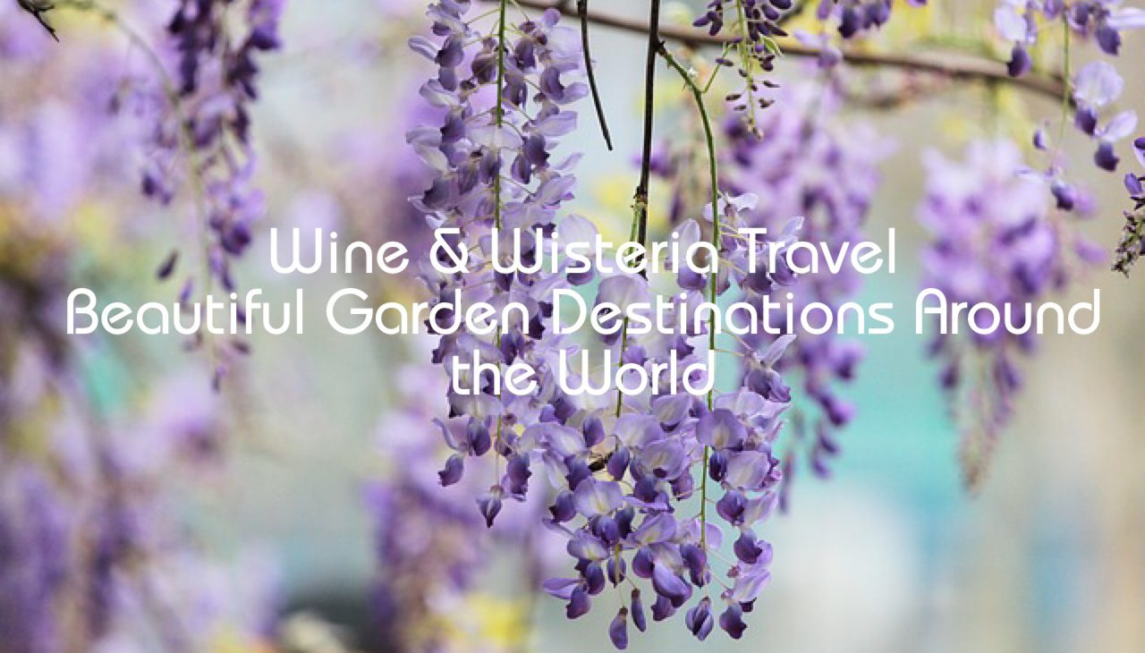 Wine and Wisteria Travel