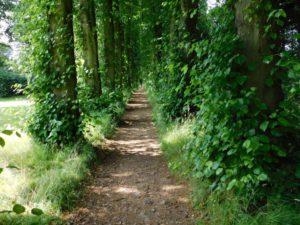 Lady Mary's walk