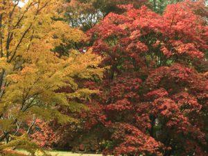 Autumn foliage at Westonbirt Arboretum