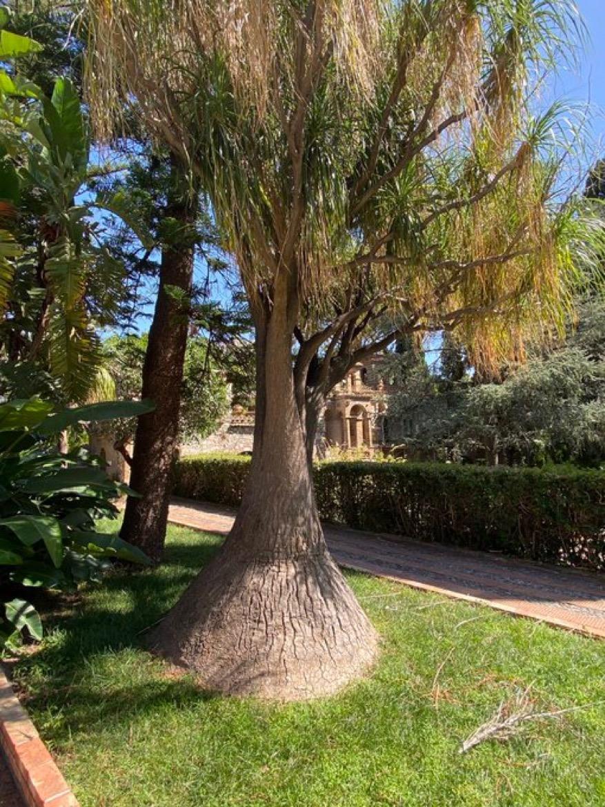Beautiful Botanical Gardens Sicily and Wine Tastings. Trees in Taormina Gardens